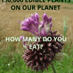 There are over 150,000 Edible plants