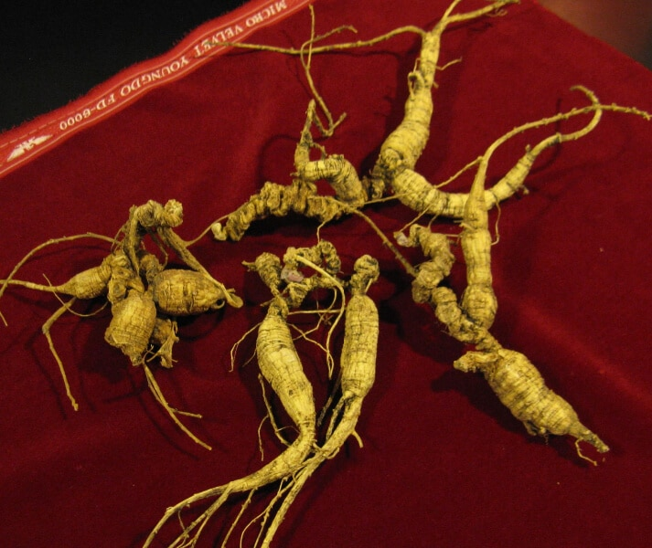 American ginseng (Panax quinquefolius) Harvested Roots