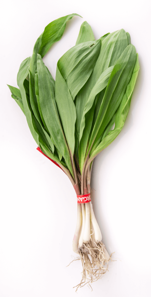 A bunch of organically-grown ramps, from a farmer's market