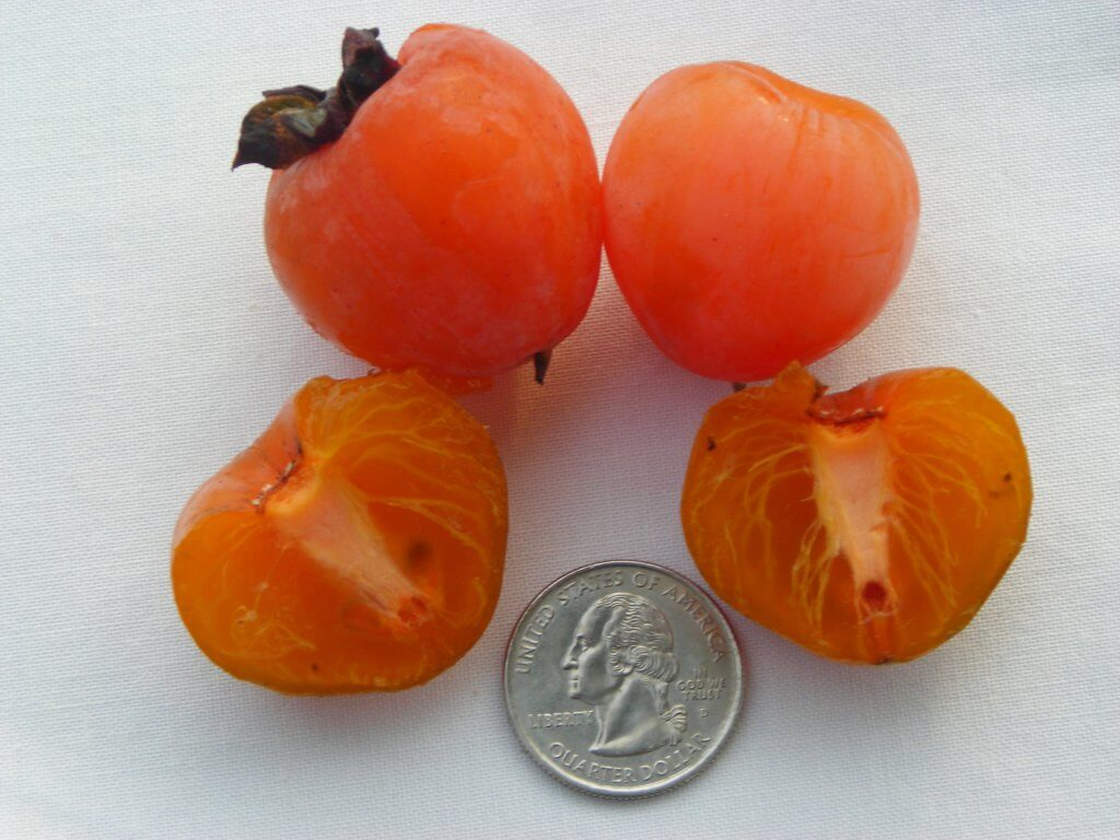 A seedless Persimmon cut in half