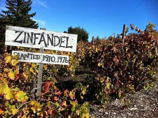 "zinfandel vines with sign stating ""planted 1910 - 1976"""