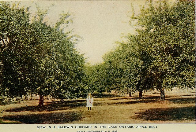 A girl standing in an orchard