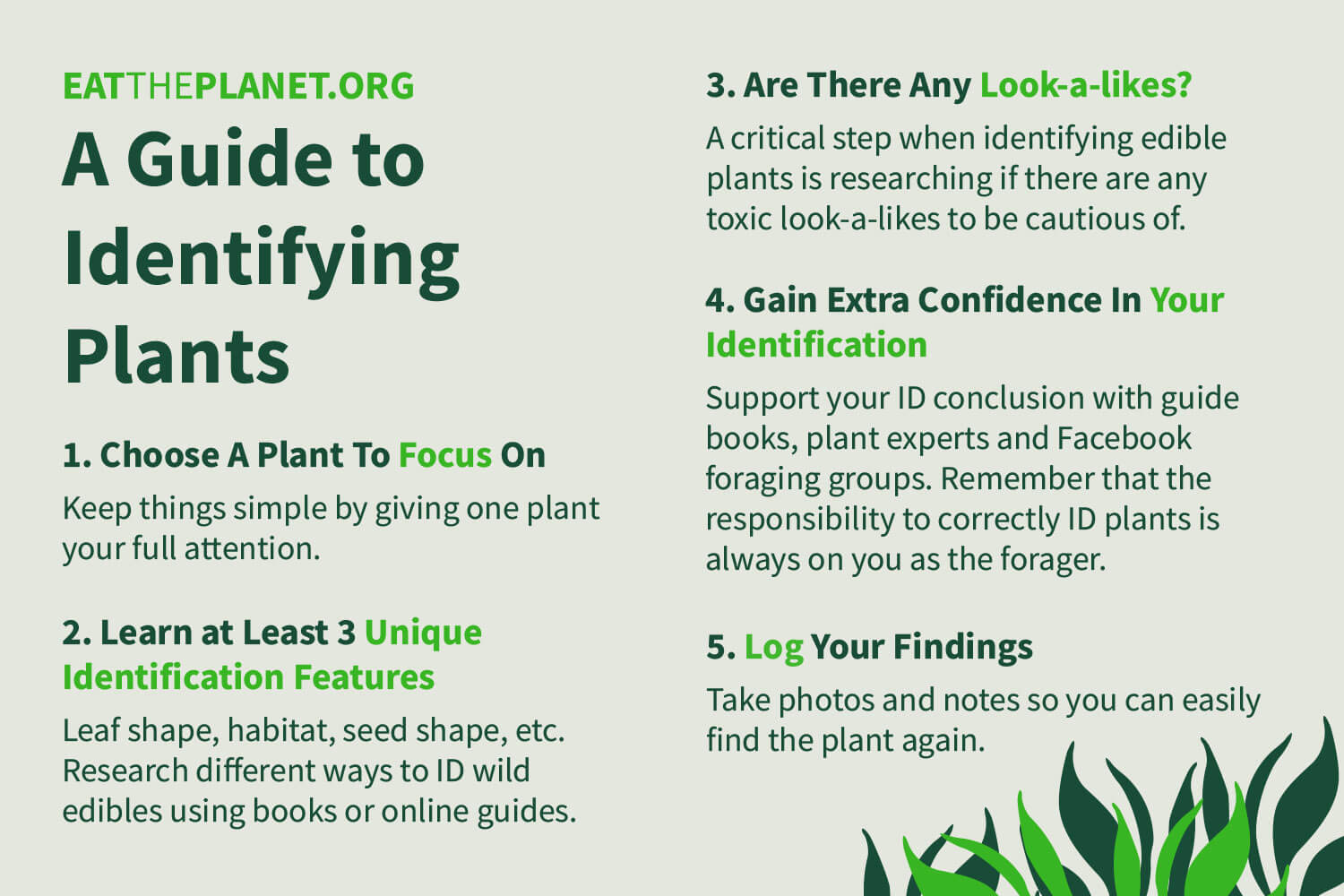 A concise graphic outlining 5 steps that can be used to identify plants.