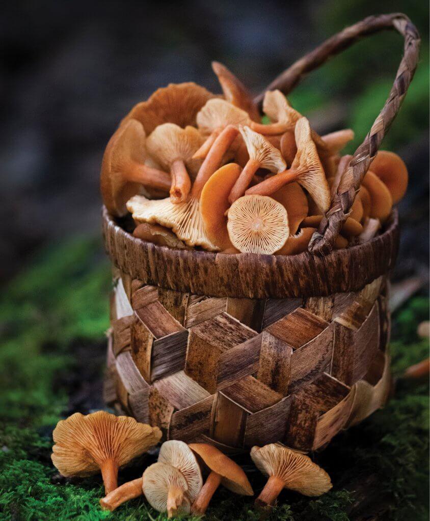CandyCap Basket