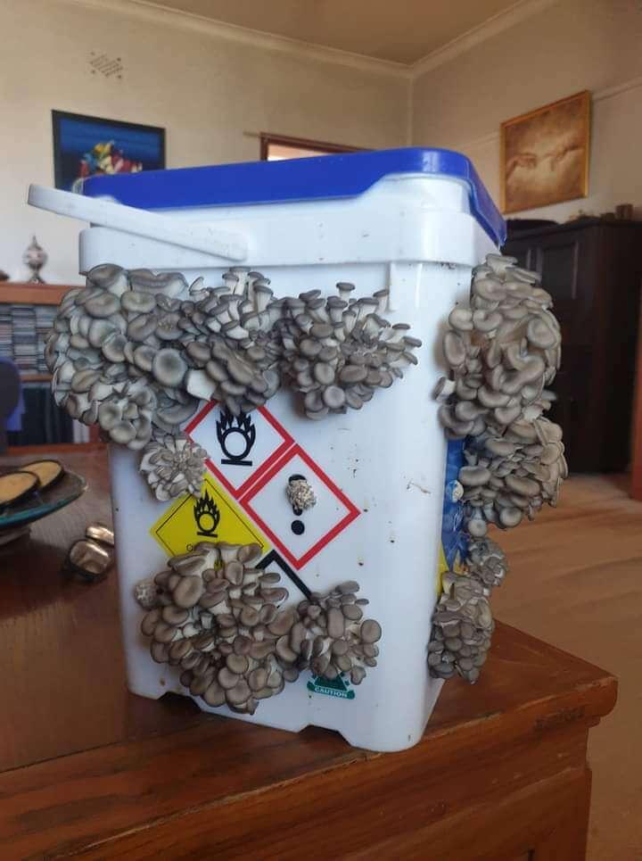 Mushroom Bucket